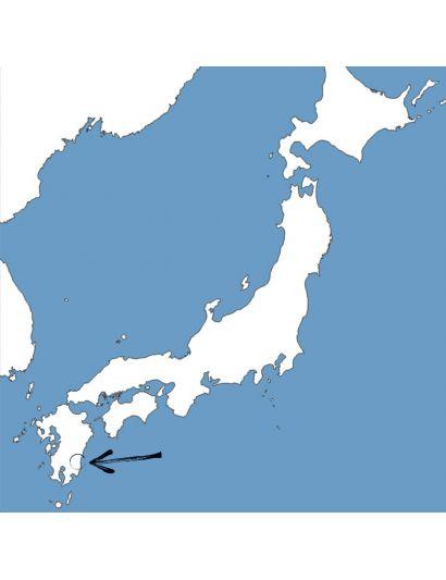 Shincha-Morimoto