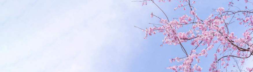 Tisanes de printemps