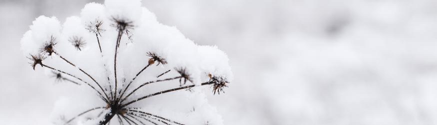 Les Tisanes d'hiver